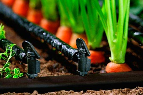 Капельное орошение – залог урожая и пышного сада