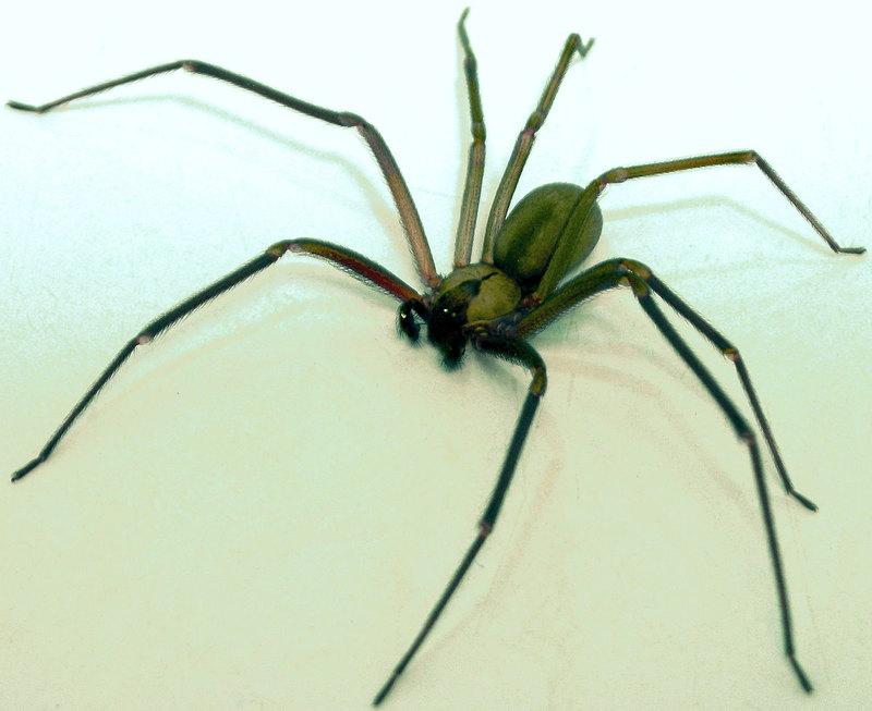 Почему паутина в пять раз прочнее стали: ученые наконец нашли ответ