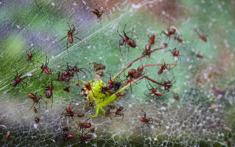Открыты осы, превращающие пауков в зомби