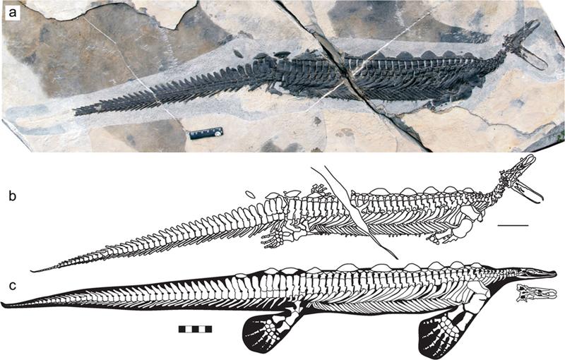 Найден триасовый ящер-утконос. И немножко стегозавр