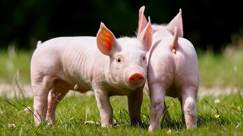 Если человек вымрет: 10 животных, которые будут доминировать на Земле