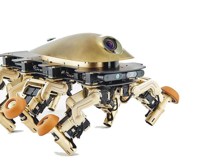 Золотой мост, робот-шпион и «Дерево Иисуса»