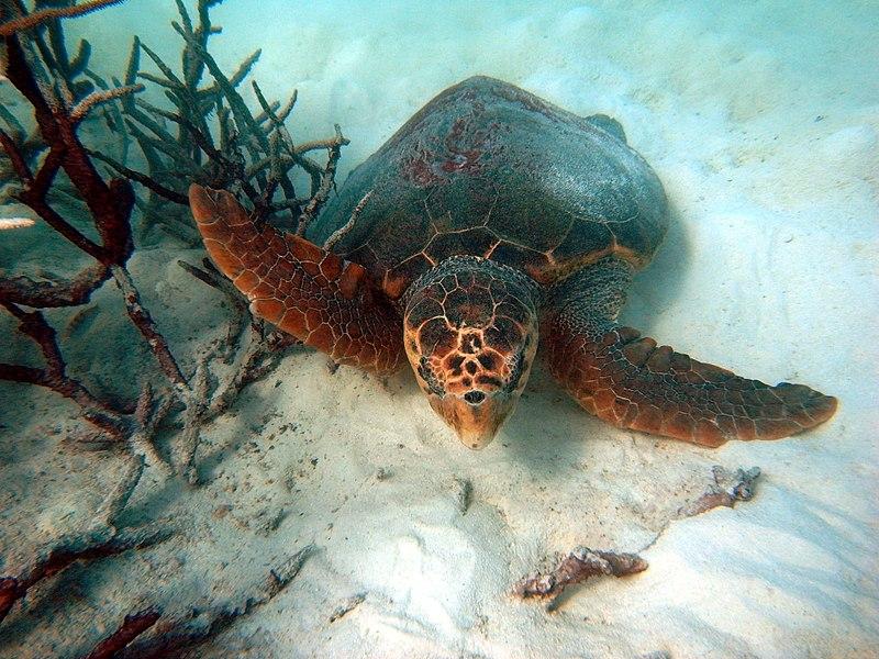 Пластик нашли внутри у каждой из исследованных черепах