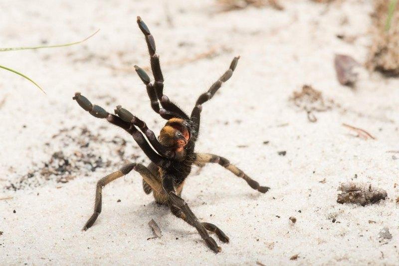 Обнаружен новый вид пауков