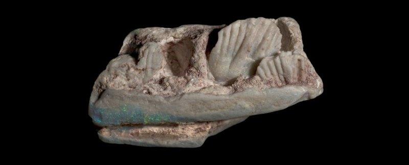 Обнаружен ранее неизвестный вид динозавров
