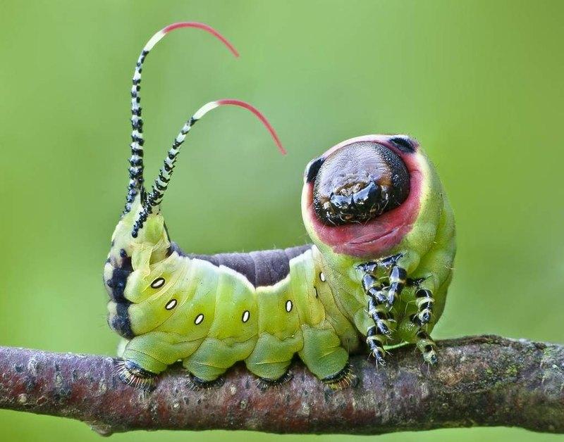 6 самых неприятных насекомых