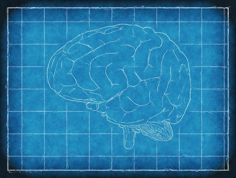 Женский мозг оказался на 3 года моложе мужского