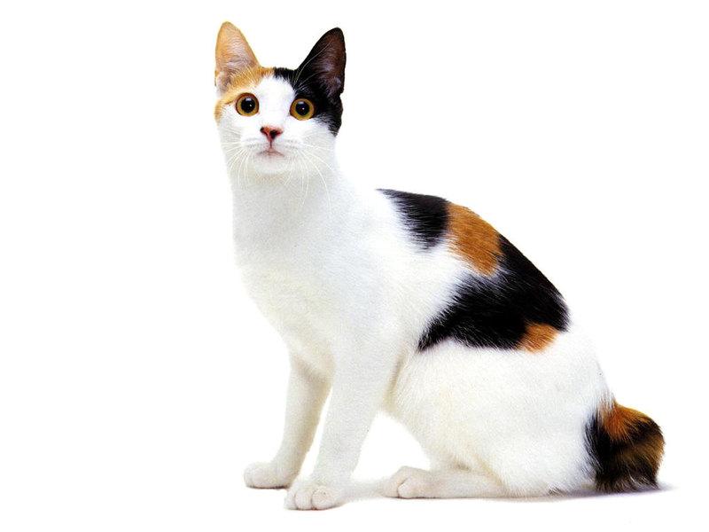 Спрашивали о кошках, самолетах и машинах? Отвечаем