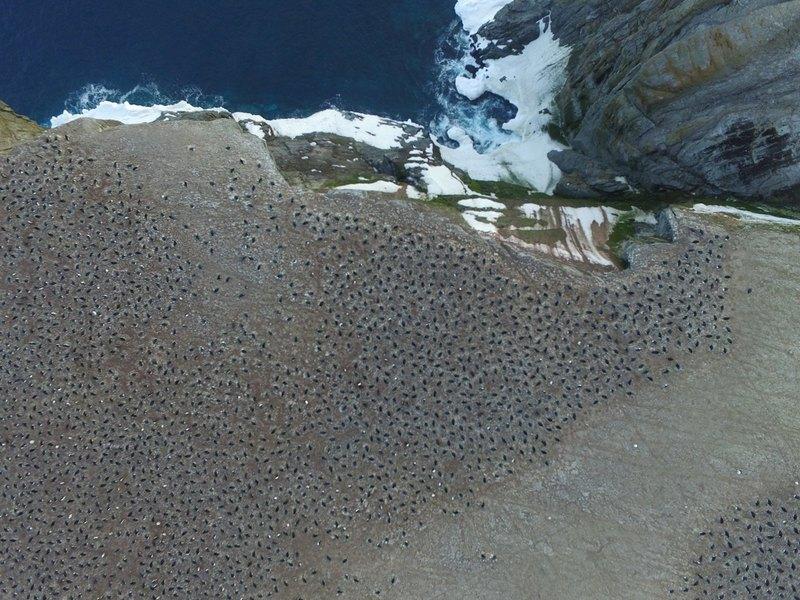 Огромная колония пингвинов оставалась незамеченной почти 3 000 лет